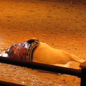 馬が倒れる演技、凄いです